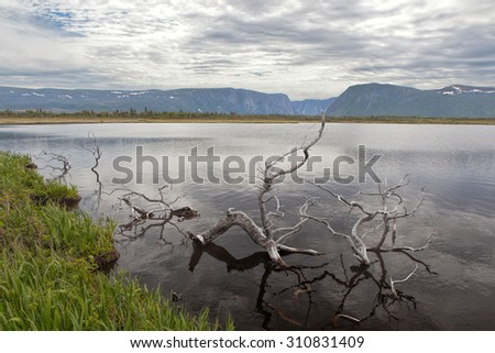 Dead wood in a small lake. - stock photo