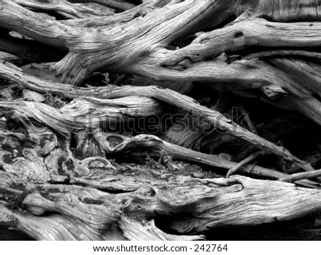 Dead wood in black and white - stock photo