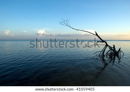 Dead wood still standing in the sea - stock photo