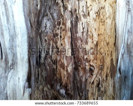 dead wood texture pattern background
