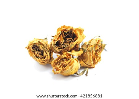 Dead yellow roses isolated