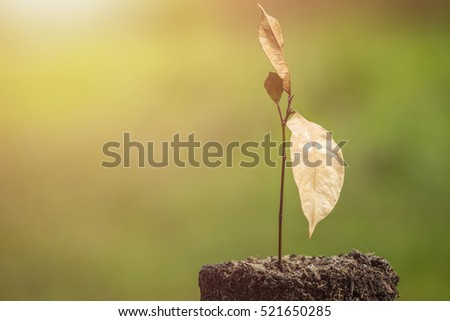 Dead young plant in dry soil on green blur background. Environment concept with empty copy space for text