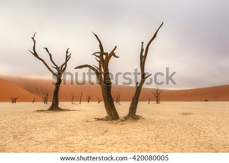 Deadvlei - Morning Mist