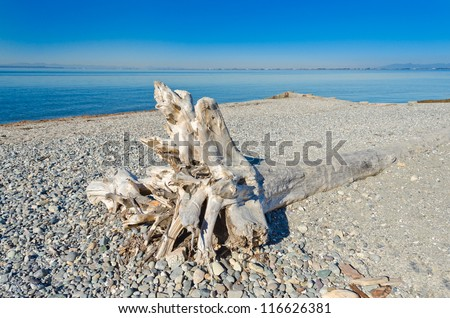 Deadwood, driftwood washed on to the beach. - stock photo