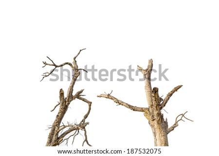 Dear tree on white background - stock photo