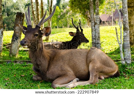 Dears at natural site Khao Yai National Park, Thailand - stock photo