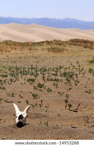 Death in the Gobi Desert, Mongolia - stock photo