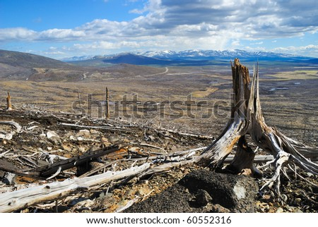 Death of a forest near to metallurgical factories. - stock photo