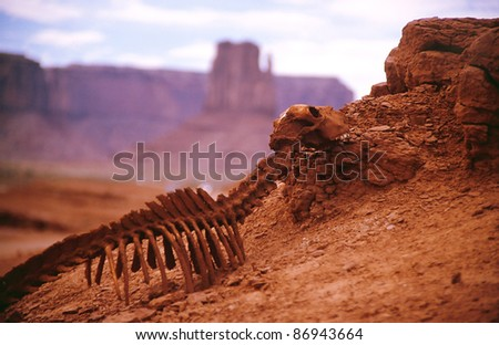 death of the animal in a hot desert of america - stock photo