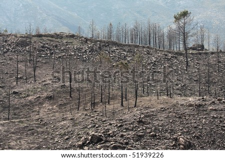 death trees in the forest - stock photo