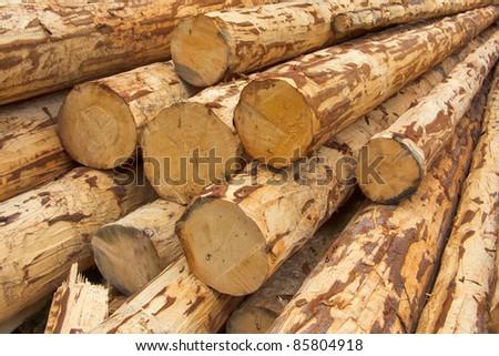debarked logs - stock photo