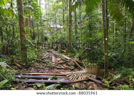Debris left on the rainforest floor by timber traffickers who have cut a big tree and hauled out the planks - stock photo