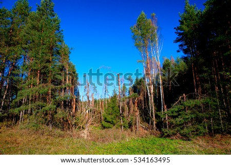 Debris of trees in the forest after the squall on August 8, 2010, Alytus county, Lithuania