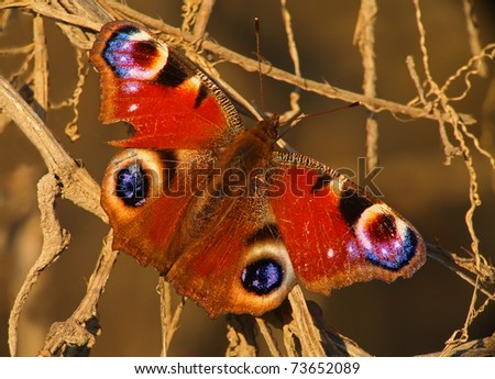 Decadent Butterfly - stock photo