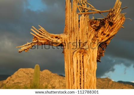 Decaying Saguaro Cactus - Sentinel of the Desert - Horizontal