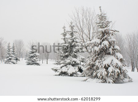 december fir tree covered with snow