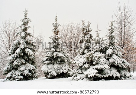 december fir tree in snow - stock photo