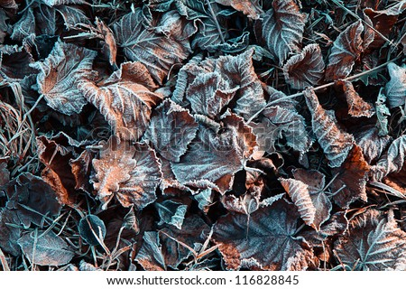 December frozen leaves on the field ground. - stock photo