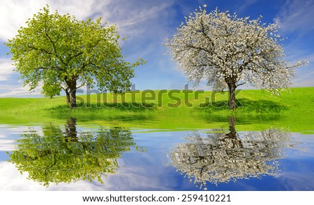 Deciduous and flowering tree on meadow. Spring landscape - stock photo
