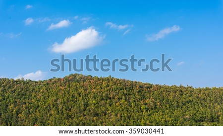 deciduous forest against the blue sky