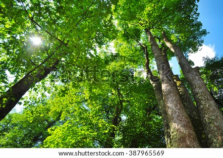 Deciduous forest ecosystem environment nature - stock photo