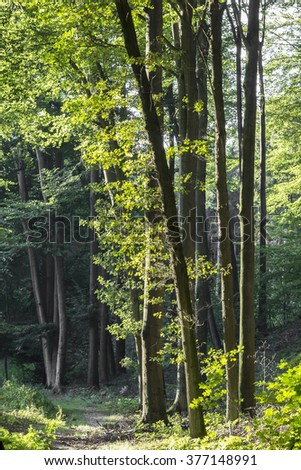 Deciduous forest in Lower Saxony, Germany, Europe - stock photo