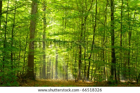 Deciduous forest in summer - stock photo