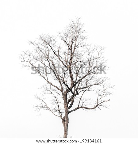 Deciduous tree crown on white background - stock photo