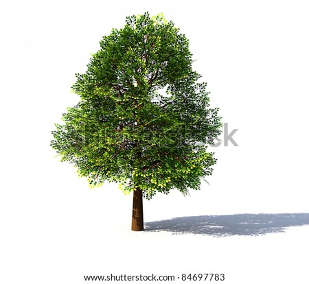 Deciduous tree rendered
