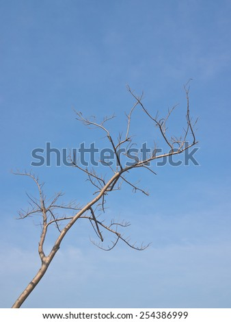 Deciduous tree under blue sky - stock photo