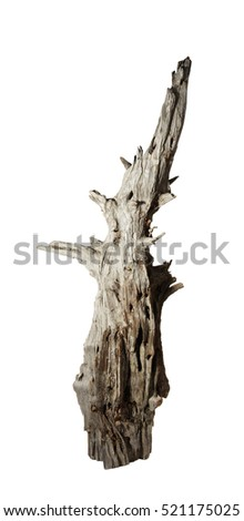 Decomposed old snag tree on the white background