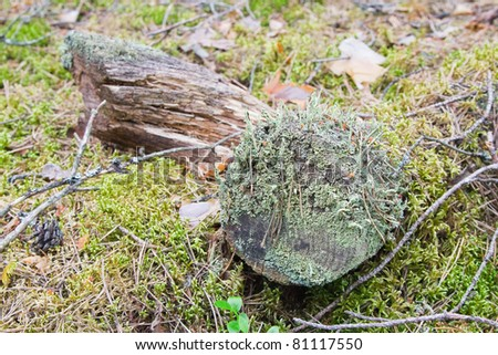 Decomposing log in the forest covered with green fungi - stock photo
