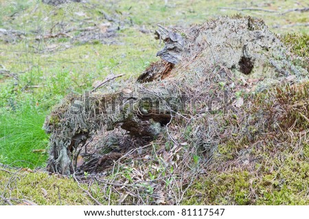 Decomposing log in the forest (looking like Dragon head) - stock photo
