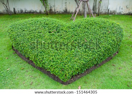 Decorate garden is a green heart. - stock photo