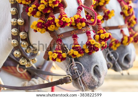 decorated horses for celebration - stock photo