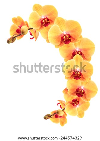 Decoration element. Nice border made from yellow orchid flowers on white background - stock photo