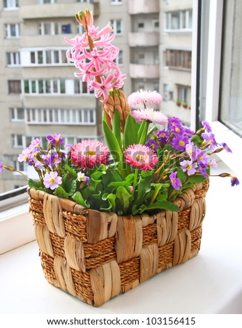 Decoration of balcony hyacinths bellis and primrose Spring flowers on basket - stock photo