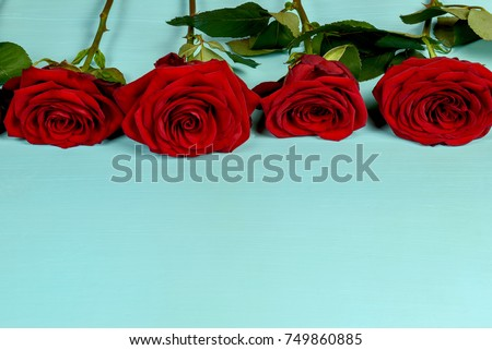 Decoration of beautiful red roses on a blue background close-up