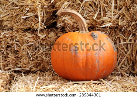 decoration of giant pumpkin at the market place