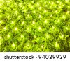 Decoration on plant - stock photo