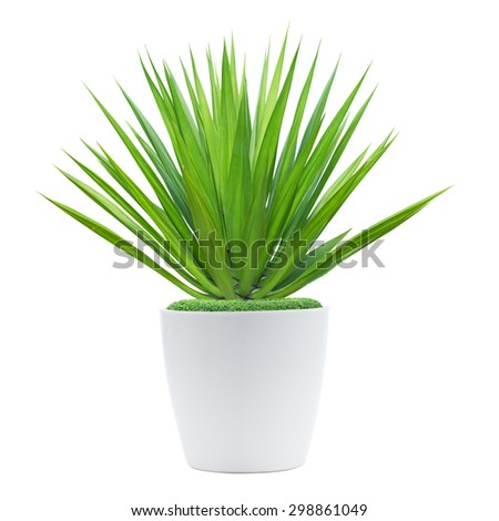 Decoration plant on pot isolated on white - stock photo