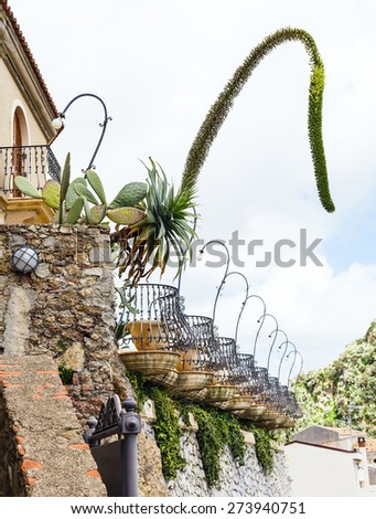decorative agave flowers and Opuntia cactus in flower beds near house in Savoca village, Sicily in spring - stock photo