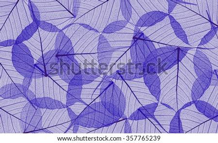 Decorative blue skeleton leaves background - stock photo