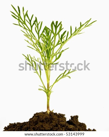 Decorative bush - stock photo
