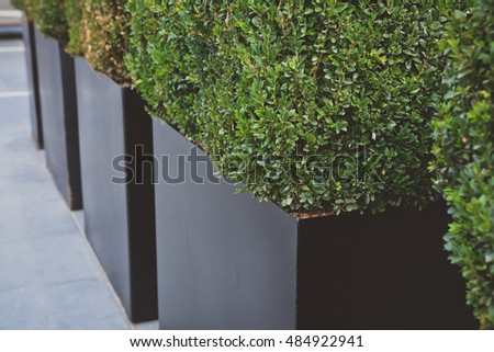 Decorative bush in a big metal pot