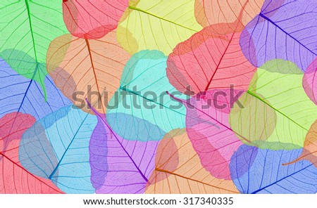 Decorative colorful skeleton leaves background