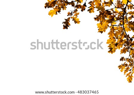 Decorative corner frame made of yellow or brown oak tree leaves and branches isolated against white background. Free space to add a text.