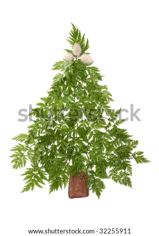 Decorative cristmas spruce from green herb put on white background