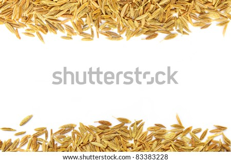 Decorative cumin seeds - stock photo