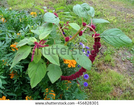 Decorative flower bed with different plants and flowers close up.                                - stock photo